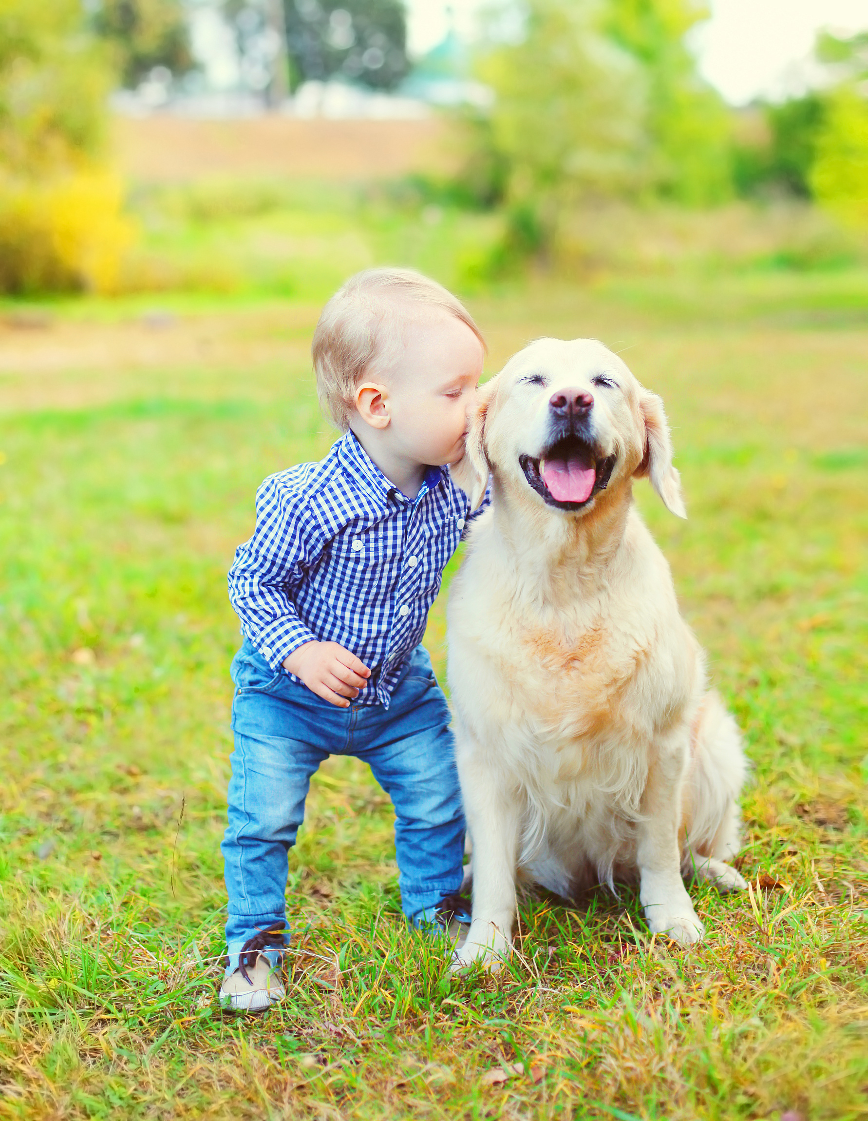 Little boy child kissing Golden Retriever dog on grass in park